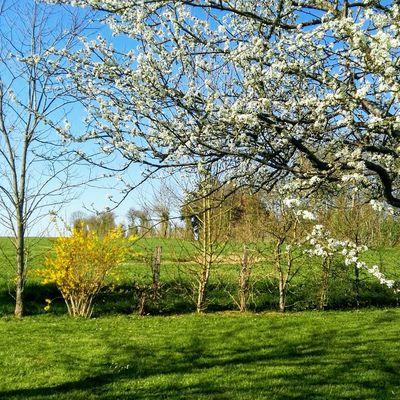 Le printemps arrive .....