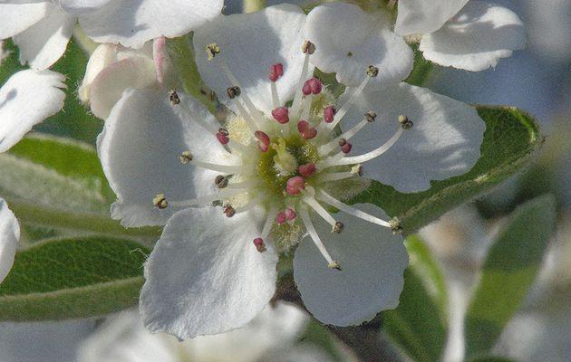 2020_04: .... Iris_nains et autre fleur, dans la garrigue...