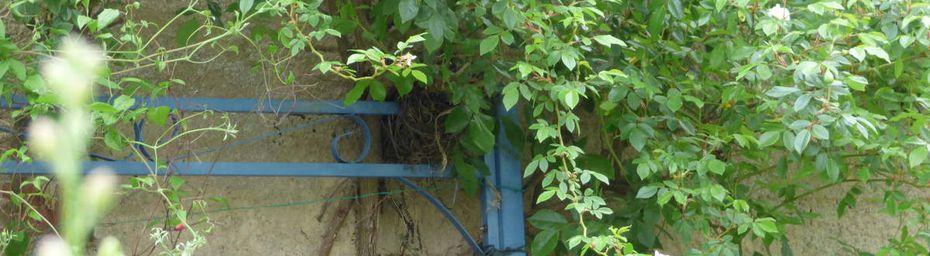 Deux squatteurs dans mon jardin.