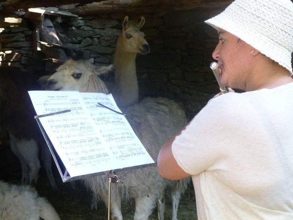 Concert privé chez les lamas