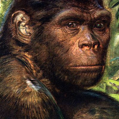 La genèse selon le pithécanthrope