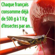 Consommer des insectes ? Vous en mangez déjà entre 500 g et 1 Kg par an !
