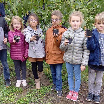 Plantation de bulbes et travaux d'automne au jardin pédagogique