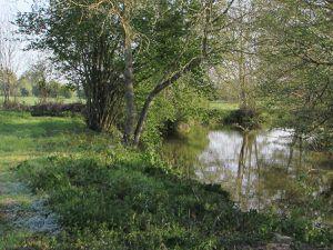 gros nettoyage des bords de rivière