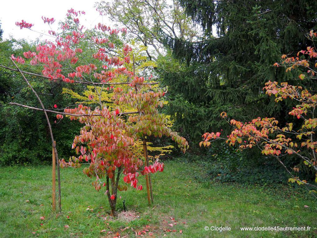 LE JARDIN DU PETIT CHASSEUR D'ORLÉANS célèbre jusqu'au 16 octobre la féérie des asters d'automne