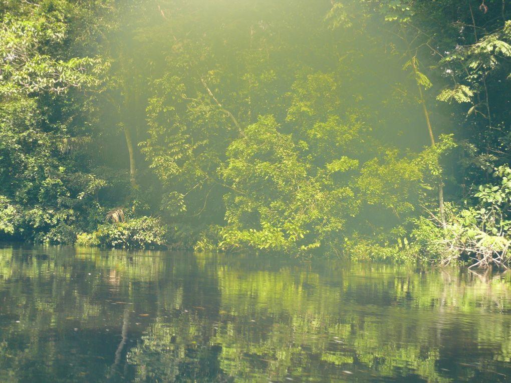 Ambiance de la Jungle!!!