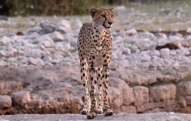 WILDLIFE en NAMIBIE 🇳🇦