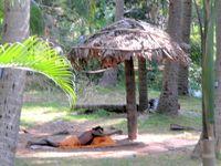 La campagne environnante autour du Matrimandir et du site d'Auroville.