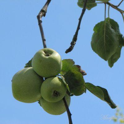 Ingersheim : Encore une belle journée au jardin