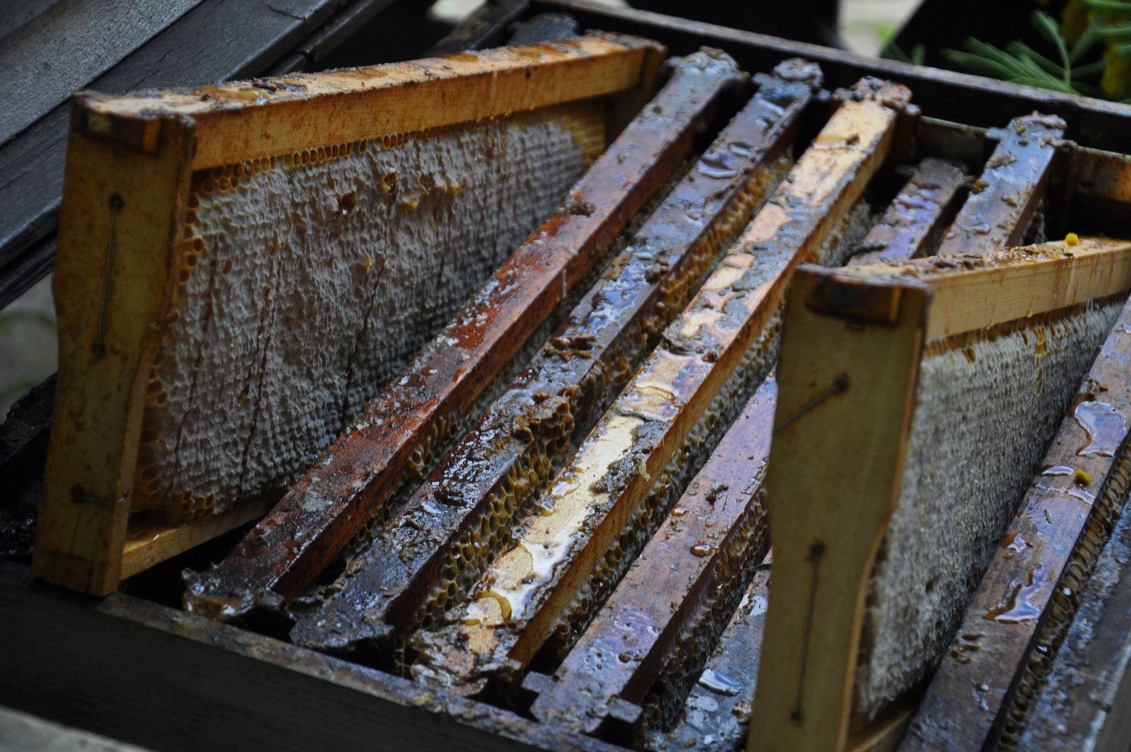 Les cadres de la ruche.
