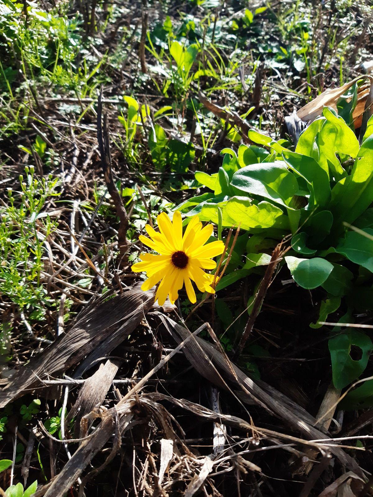 Il y a des fleurs partout pour qui veut bien les voir
