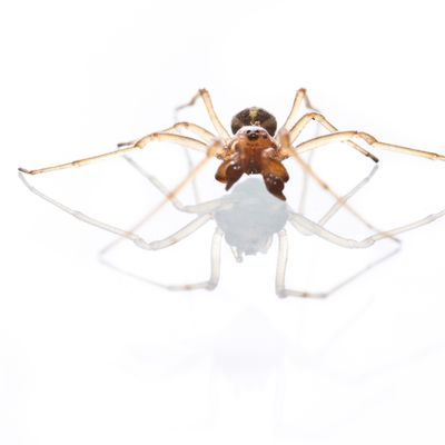 Carnet d'arachnides