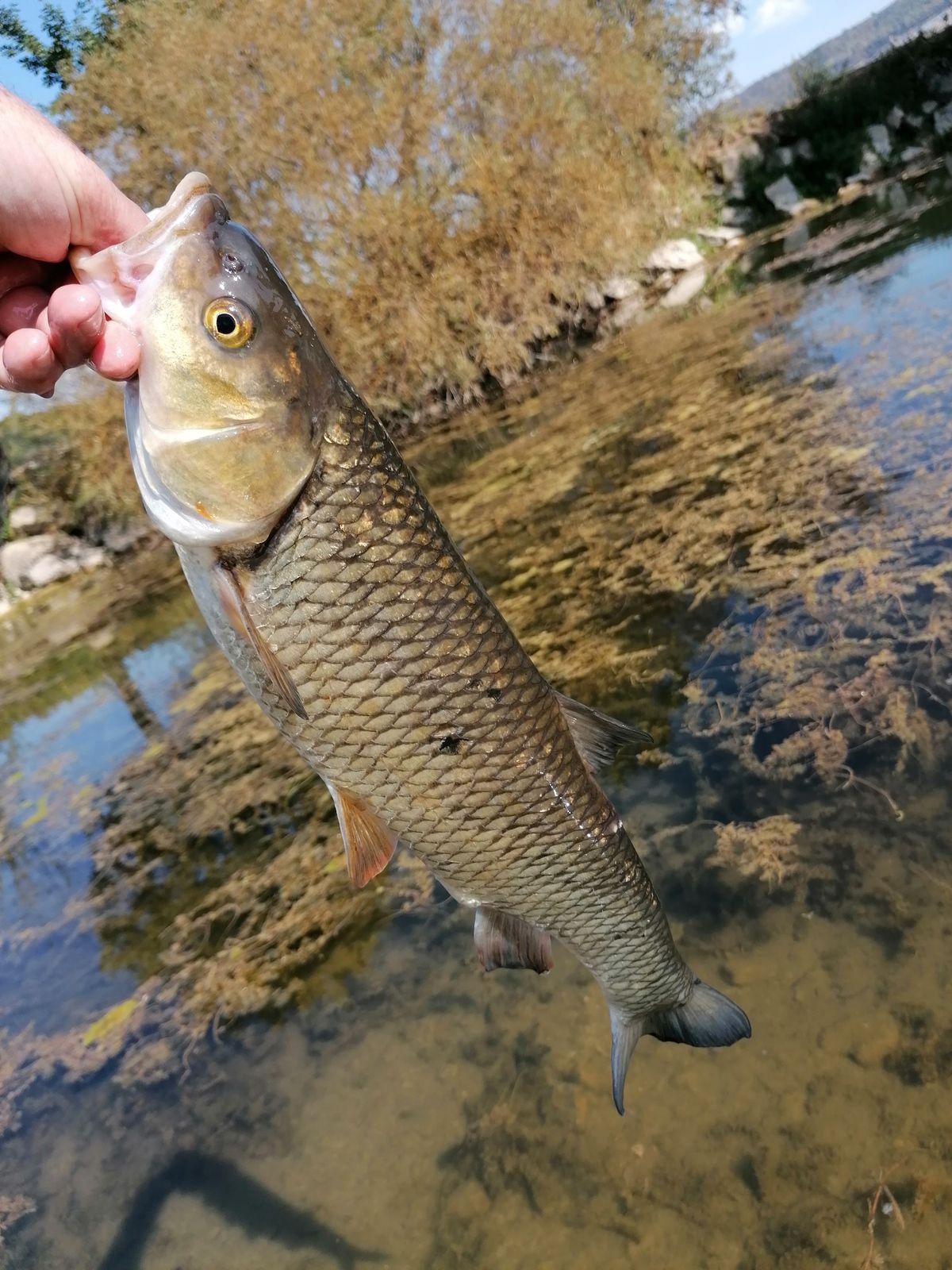 Dernière pêche en sèche 2020.