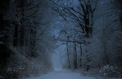 Si par une nuit d'hiver un voyageur