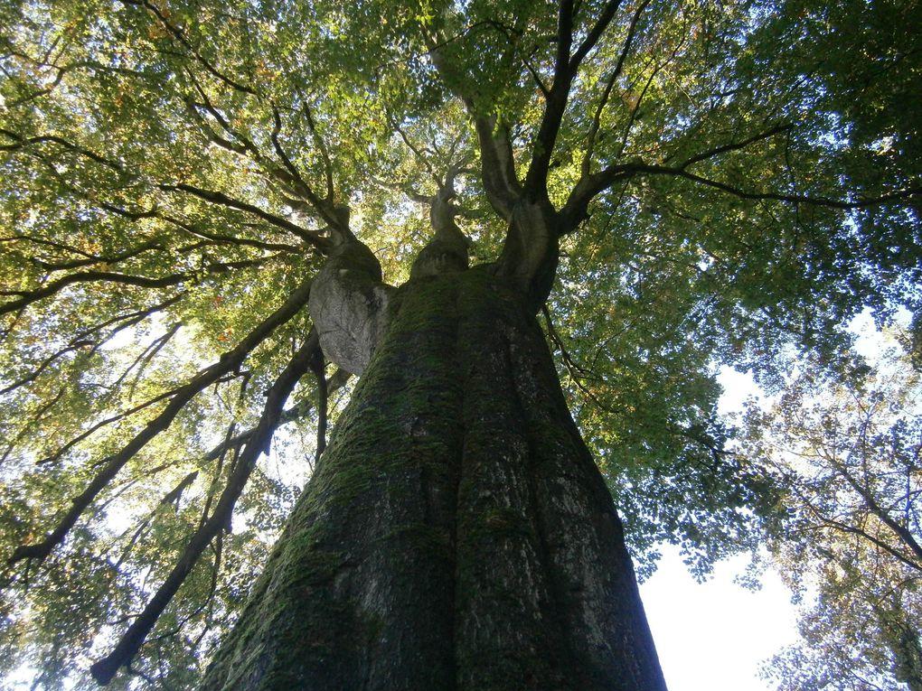 La forêt en automne : sortie-découverte des classes maternelles