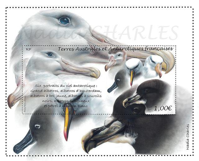 Le dessin original et la première maquette de Nadia Charles : 5 becs d'albatros et un de pétrel.