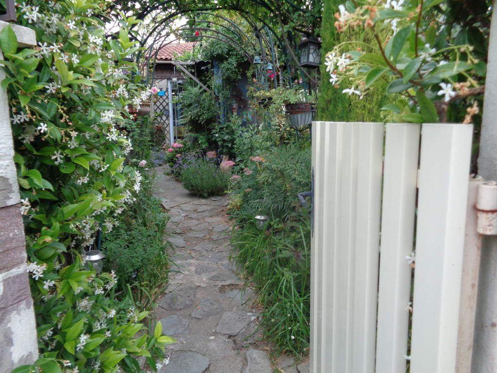 Mon jardin en images en juillet ........