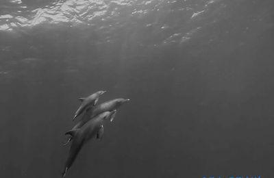 Beaucoup de naissances de delphineau