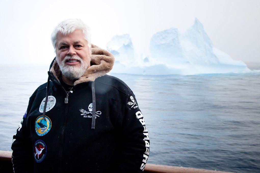 Pourquoi Sea Shepherd renonce cette année à sa campagne anti-baleiniers