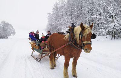 Balade en traîneau tiré par des chevaux - Haut-Doubs