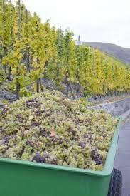 La Rhénanie-Palatinat et la Vigne