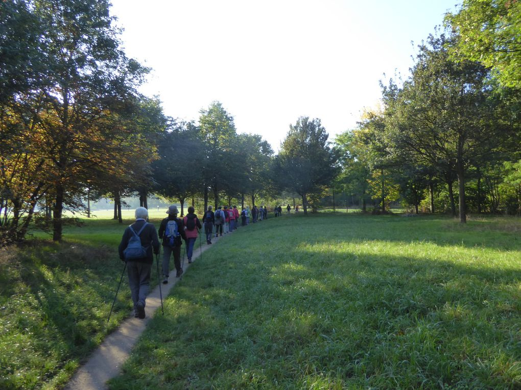 Marche nordique au Bois de Vincennes. 7,7 km