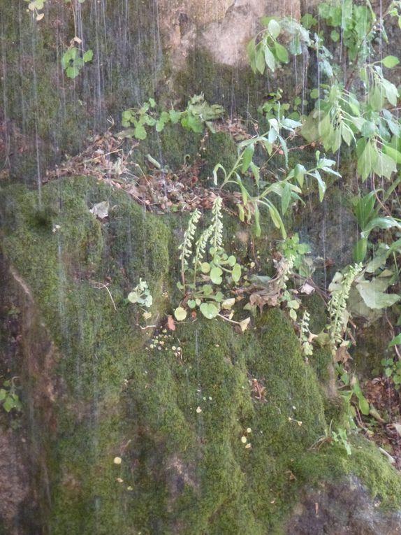 Oasis de fraicheur au coeur du Luberon