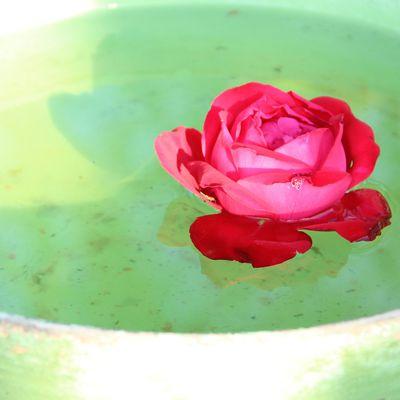 Les Élixirs (Floraux) de l'Amour