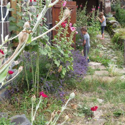 Quelques fleurs de mon jardin / Balade en Haute-Loire