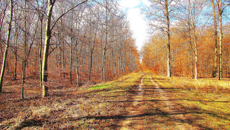 carrefour_GR12_chemin de Pierrefonds