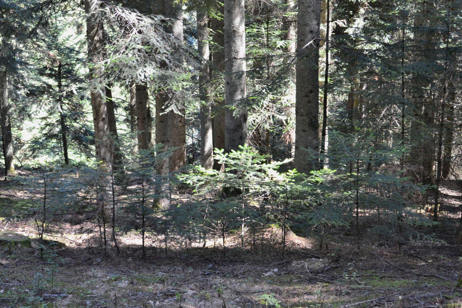 Petite balade sportive dans la forêt de Taillard!