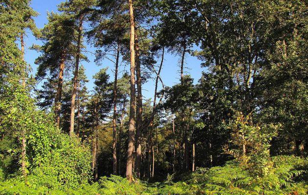 en forêt de Retz_80_09_2019_sur la Route Tortue et la Route Droite