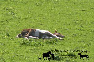 Faut-il arrêter la supplémentation d'un cheval au pré?
