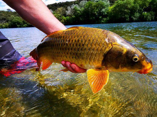 1 semaine, 6 jours de pêche et 6 espèces