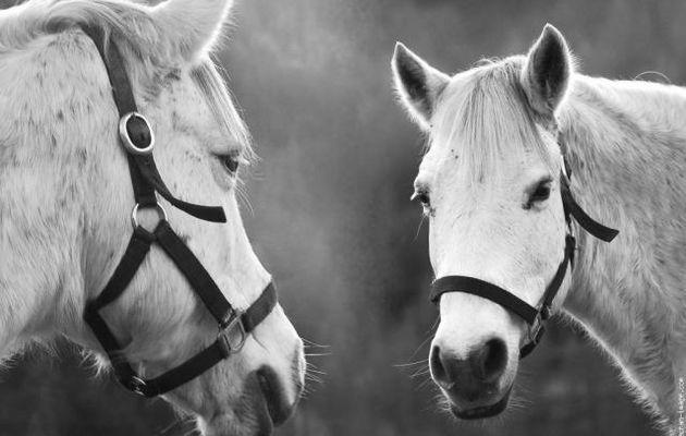 Votre cheval vous ressemble...