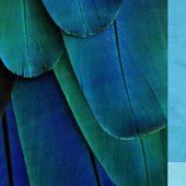 Plume.fr : vente en ligne de plumes, plume décoration, plume mariage, plume ornement, mariage, voilette, sisal, fourniture chapeau, modiste, coiffe, cuir - Vente plumes - achat plume