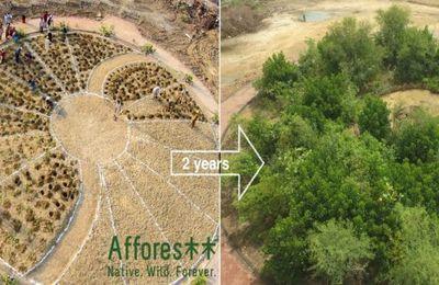 Une forêt de 1 000m² bientôt plantée en plein Lyon !