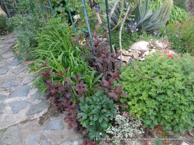 Mon jardin Le Clos fleuri en Mai .....2019