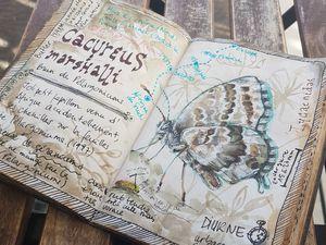 Brun des pélargoniums, Cacyreus marshalli, parc du Vallon, Lyon