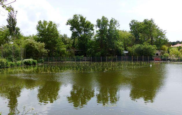 Des roseaux dans le petit lac du Tanchet