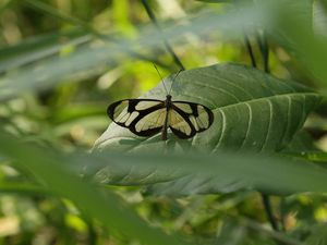 Expédition au Pantanal (Brésil)