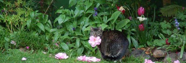 Les fleurs du chat