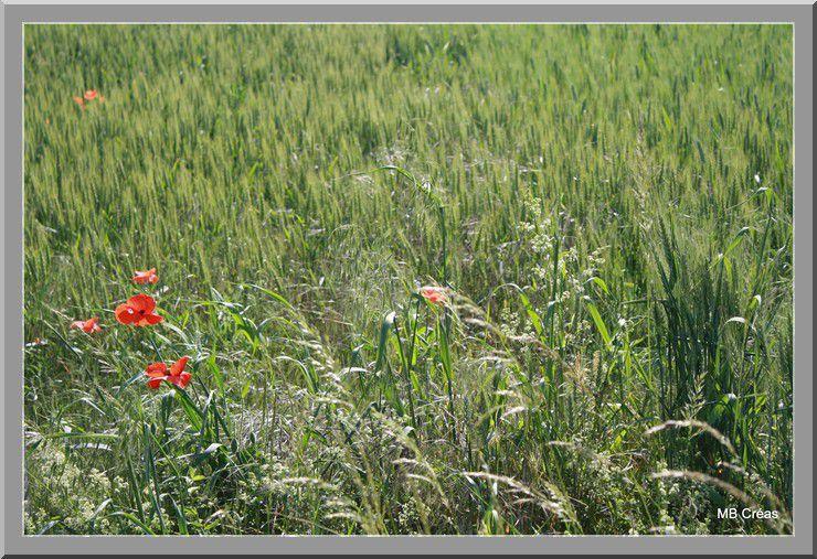 Album - Photos-fleurs