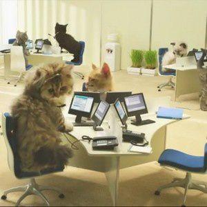 L'instant pub : les chatons de Bouygues Telecom !