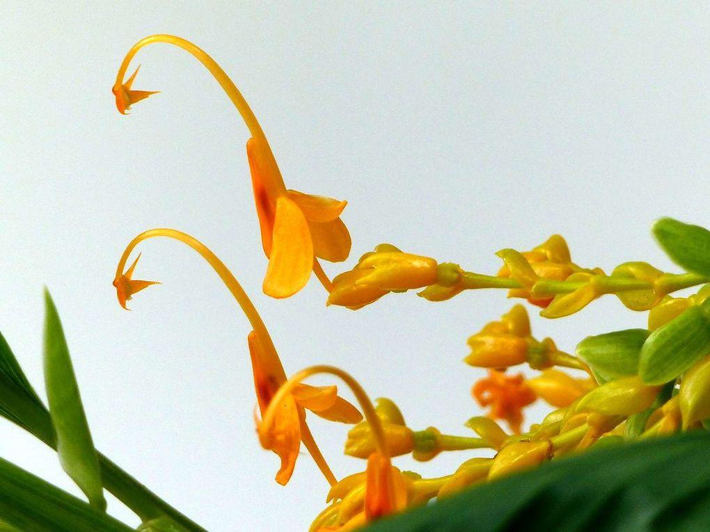 Fleur du jour (21)