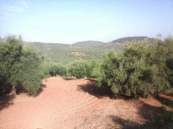Photos paysages du jour que des oliviers + un être qui apprécie la chaleur. Procession avec les pénitents
