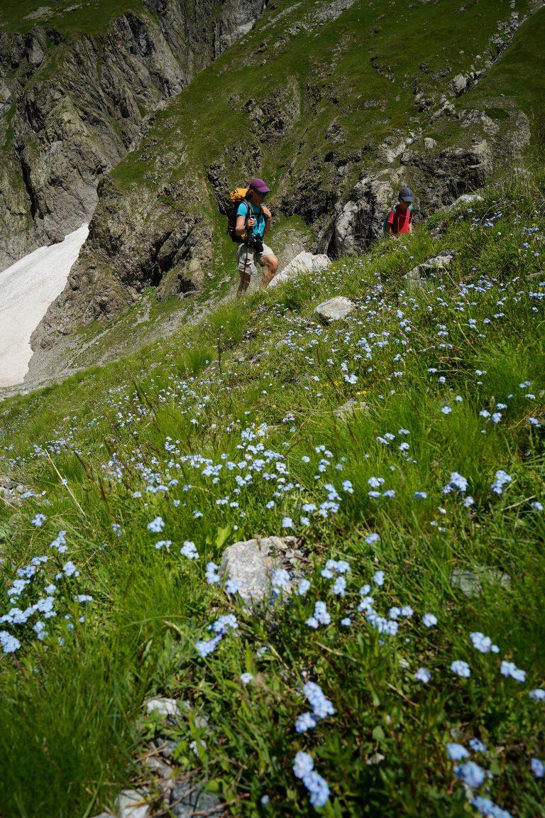 dans les champs de myosotis, à droite de la seconde photo le haut du couloir nord du Berchon de Chauvetane skié 2 mois plus tôt