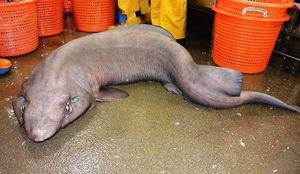 Créature marine étrange observée en Ecosse