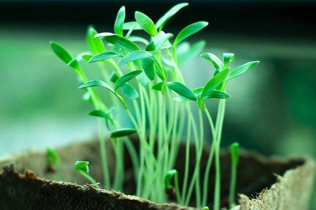 blog-maman-picou-bulle-eveiller-conscience-ecologique