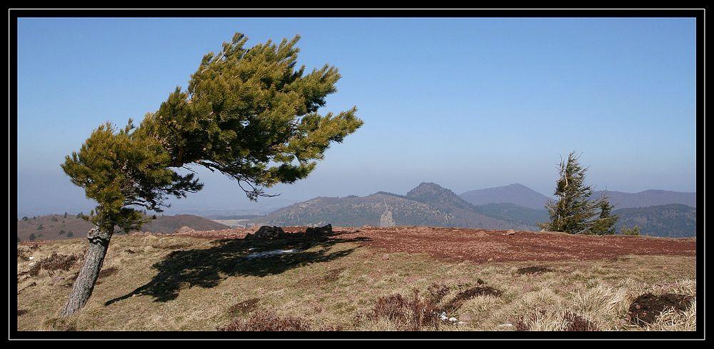 """""""Z'Album"""" : arbres"""